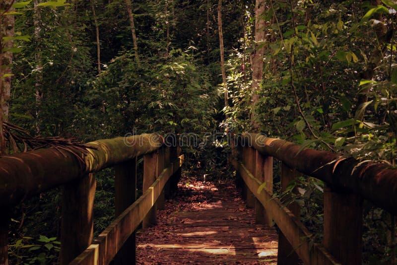 Wooden bridge leading into jungle royalty free stock image