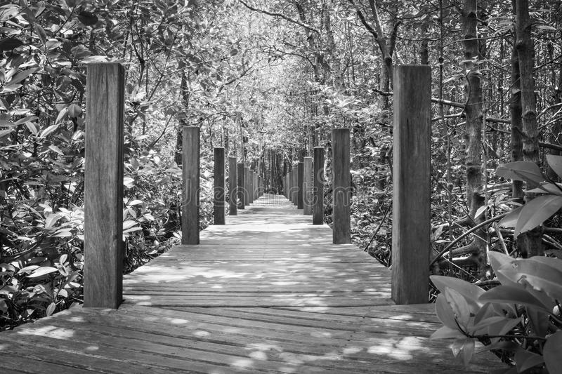 Wooden bridge in the Mangrove forest,monochrome color style.  royalty free stock photography