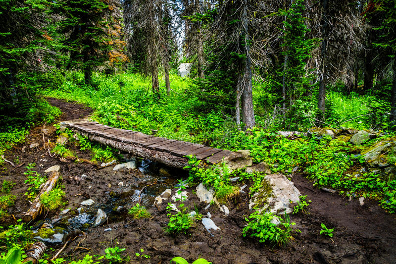 Wooden bridge over a muddy creek on Gil`s hiking trail to the top of Tod Mountain stock image