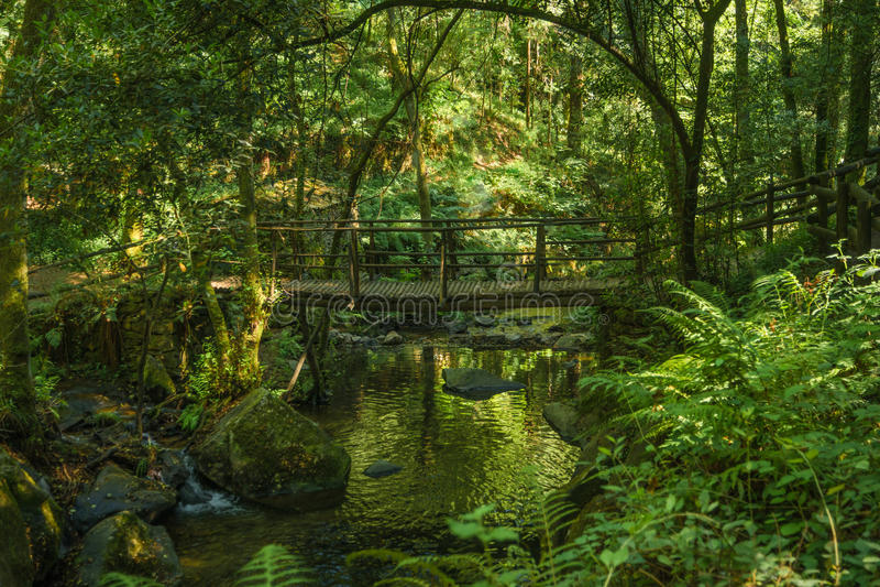 Wooden bridge over the Rio Mau in Cabreia`s Park, Sever do Vouga. Aveiro, Portugal royalty free stock photo