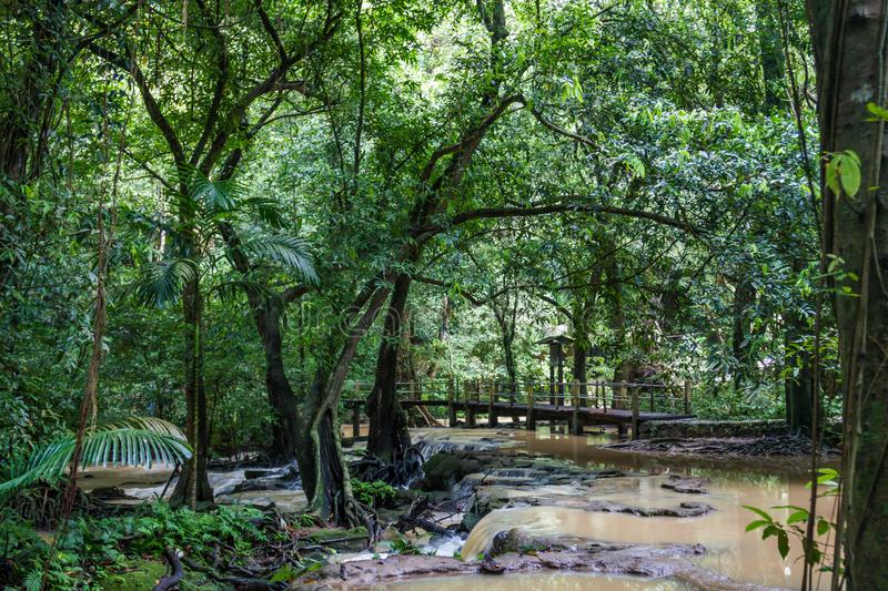 Wooden bridge over a stormy creek in jungle Phuket, Thailand.  stock photos