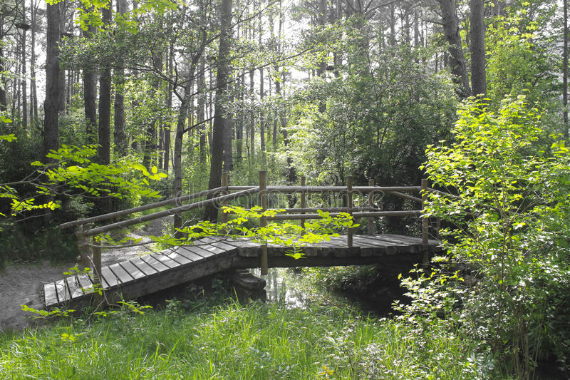 Wooden bridge over a stream in a forest. With trees stock photo