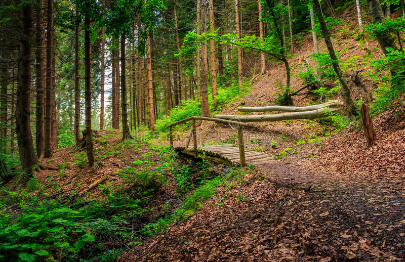 Wooden bridge in pine forest stock images