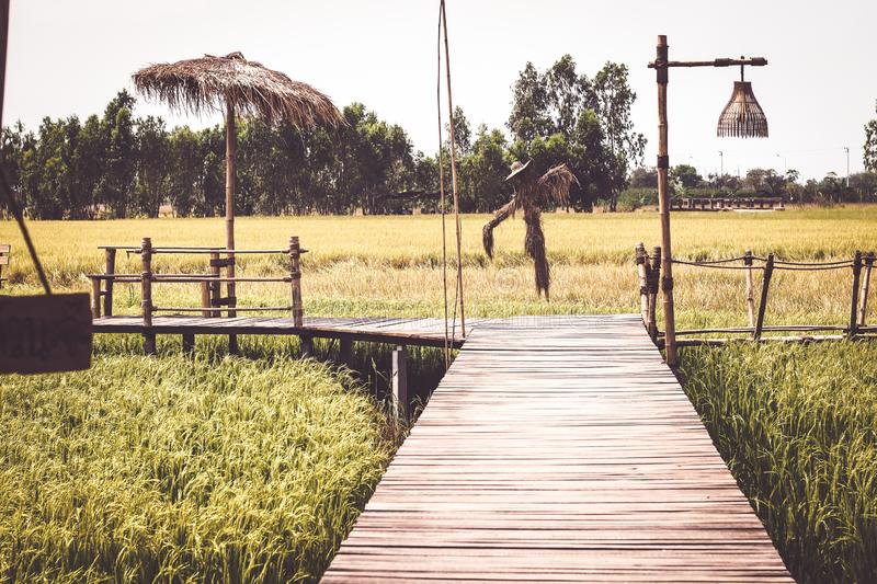 Wooden bridge in the rice field in summer Thailand background.  royalty free stock photo