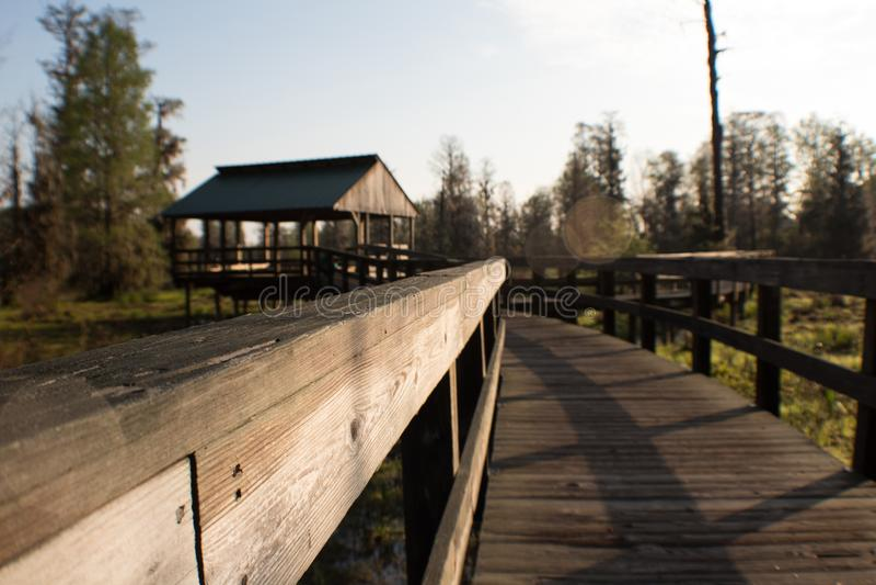 Wooden bridge in swamp. royalty free stock photo