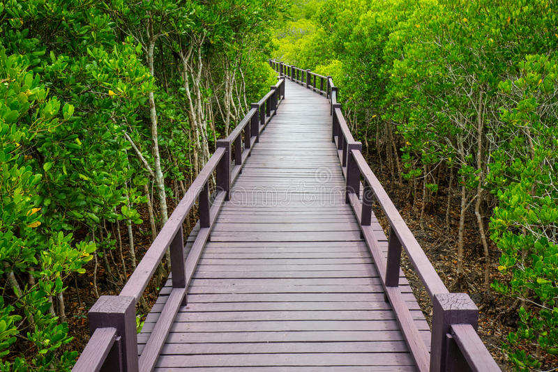 Wooden bridge to the jungle,Thailand. Wooden bridge to the jungle,Prachuap Khiri Khan,Thailand royalty free stock images