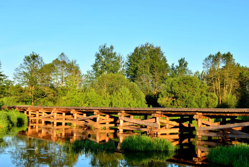A wooden bridge of tree logs lies across a small river inside a wooded area among green nature. royalty free stock photos