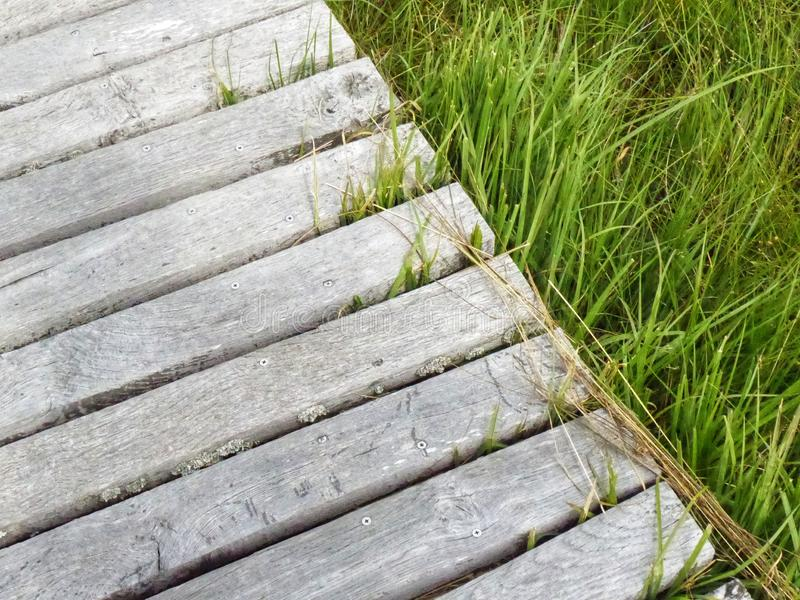 Wooden bridge trough grass land. Swamp background. royalty free stock images