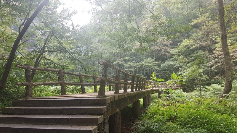 Wooden Bridge Zhangjiajie National Park stock images