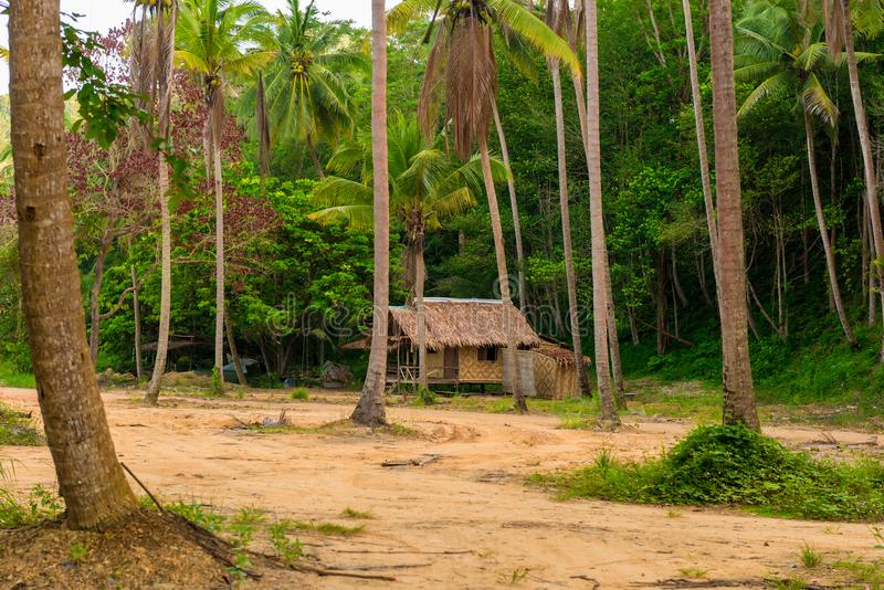 Wooden bungalow among tall palms. In Thailand royalty free stock image