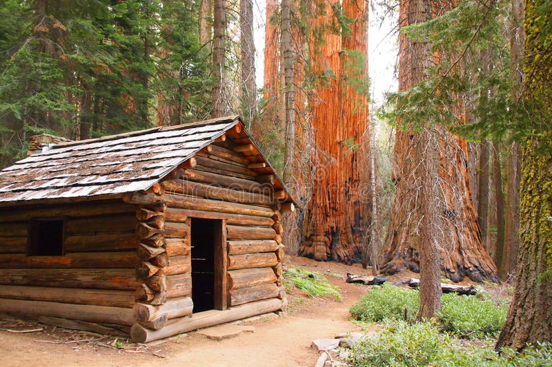 Wooden cabin in sequoia forest royalty free stock photos