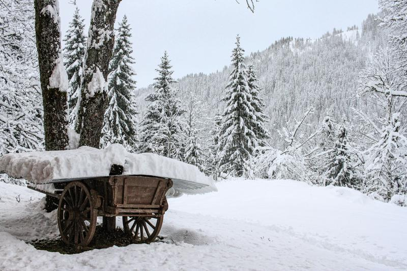 A wooden cart in a pine forest after a heavy snowfall.  royalty free stock photography