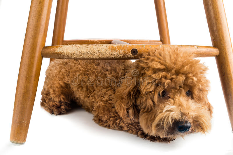 Wooden chair badly damaged by naughty dog chew and bites. stock photography