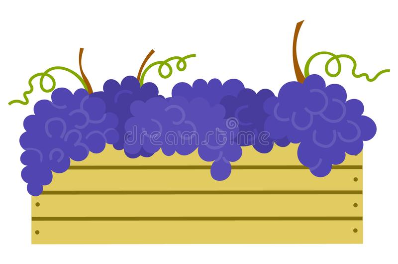 Wooden Container with Ripe Purple Grapes Isolated. Icon. Vector vineyard fruits, seedless bubo, viticulture element. Winemaker industry, grapevine symbol vector illustration