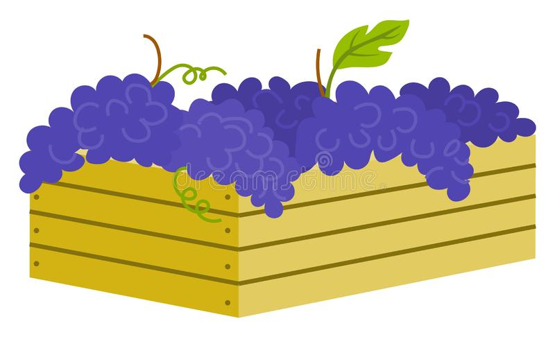 Wooden Container with Ripe Purple Grapes Isolated. Icon. Vector vineyard fruits, seedless bubo, viticulture element. Winemaker industry, grapevine symbol stock illustration