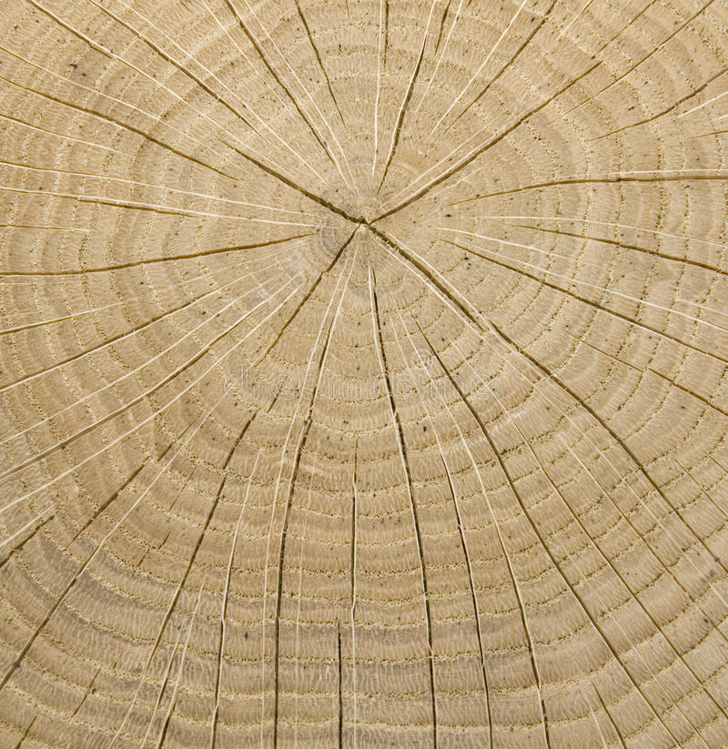 Download Wooden core stock photo. Image of nature, lines, cross - 11534792