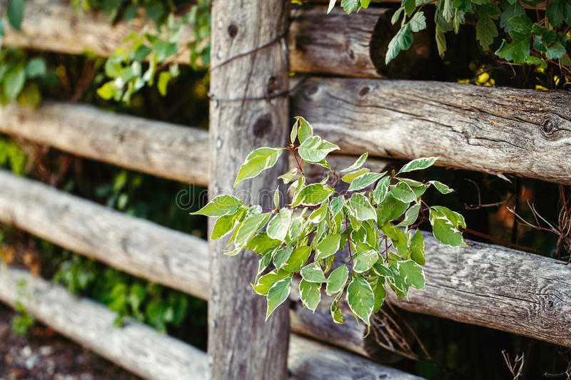Wooden country village fence made of big large logs, trees plants bushes behind it, textured background royalty free stock photos