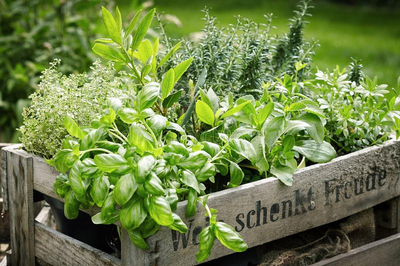 Wooden crate with variety of potted culinary herbs stock images