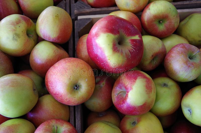 Farm fresh apples overflowing wooden crates royalty free stock images