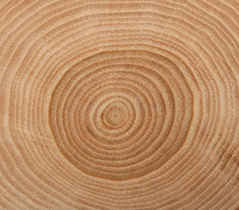 Wooden cut texture stock image