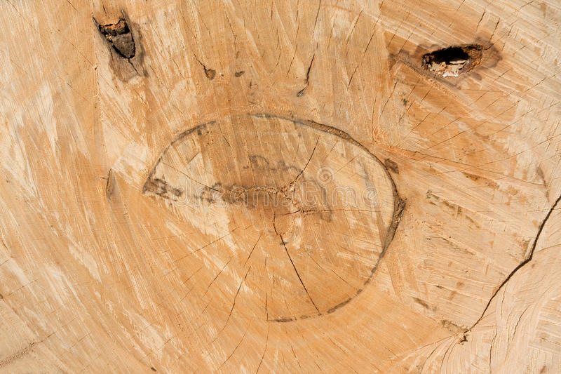 Download Wooden Cut Texture Background Stock Photo - Image: 14521854