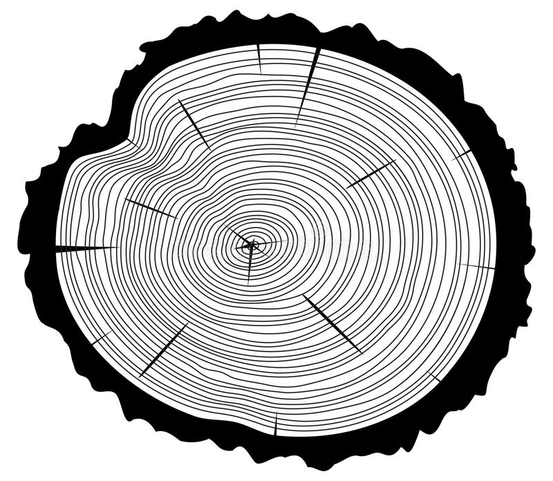 Wooden cut of a tree log, vector. Black and white wooden cut of a tree log with concentric rings and bark, vector royalty free illustration