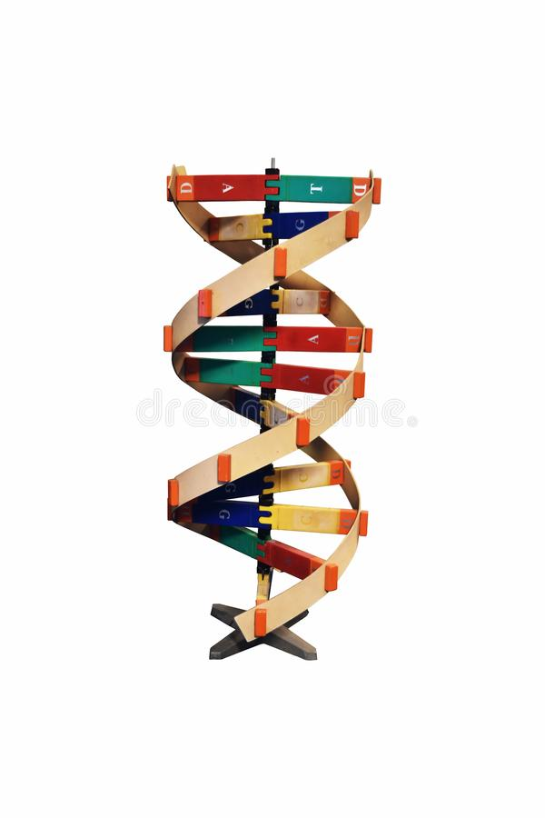 wooden DNA model royalty free stock image