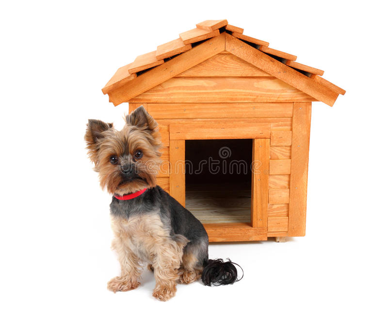 Download Wooden Dog's House And Dog. Stock Image - Image of small, animals: 32109529