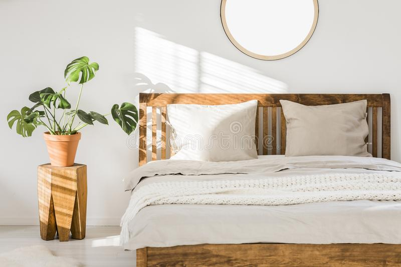 Wooden double bed with white pillows, sheets and knit blanket st. Anding in bright bedroom interior with fresh plant on bedside table and round mirror on the stock photos