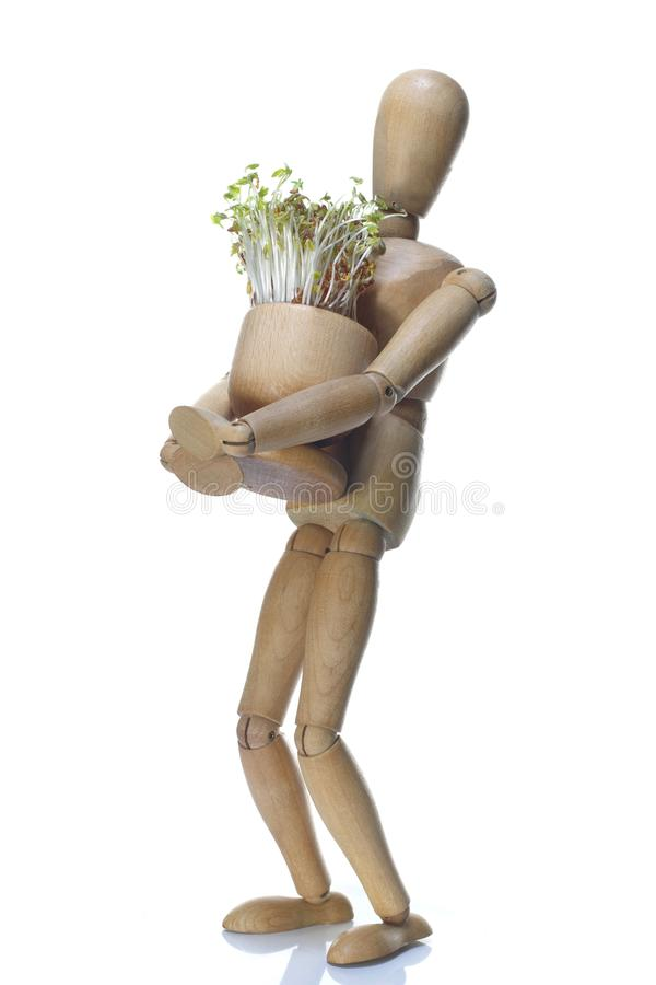 Free Wooden Dummy And Pot With Cuckooflower Royalty Free Stock Photo - 108825475