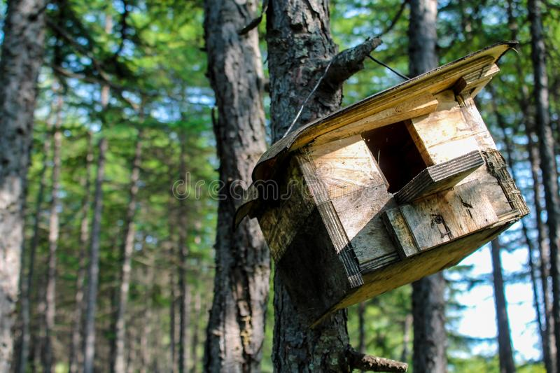 Wooden feeder hanging in the tree. Hand made house for birds like sparrows and small animals like squirrels in the park or forest. Wildlife summer wallpaper or stock image