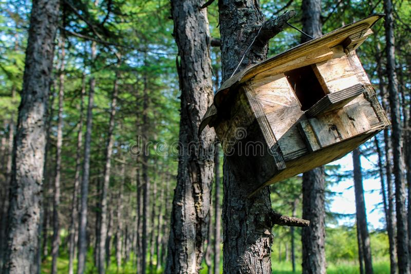 Wooden feeder hanging in the tree. Hand made house for birds like sparrows and small animals like squirrels in the park or forest. Wildlife summer wallpaper or stock images