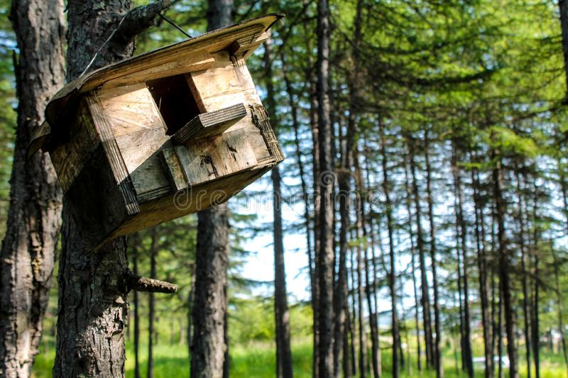 Wooden feeder hanging in the tree. Hand made house for birds like sparrows and small animals like squirrels in the park or forest. Wildlife summer wallpaper or stock photos