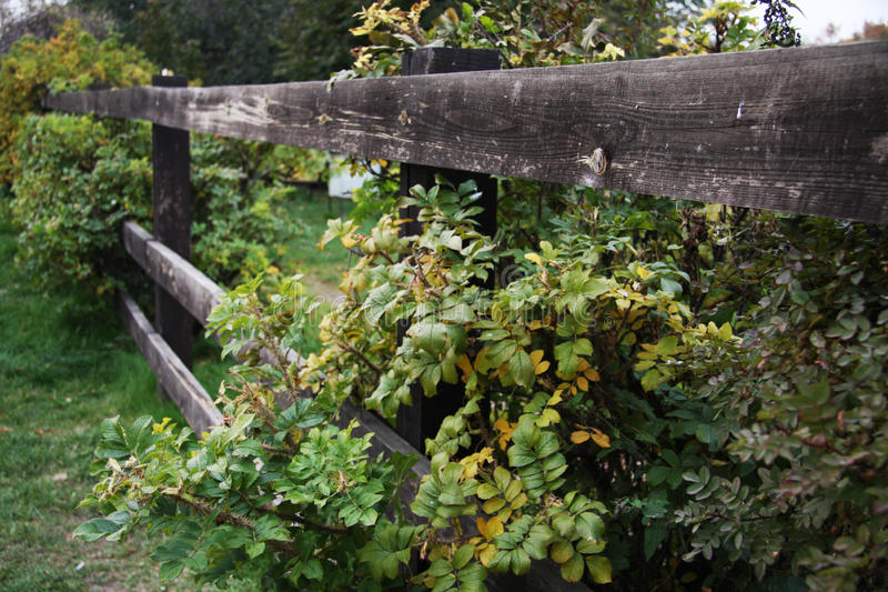 Wooden fence and a bush. In the countryside stock photo