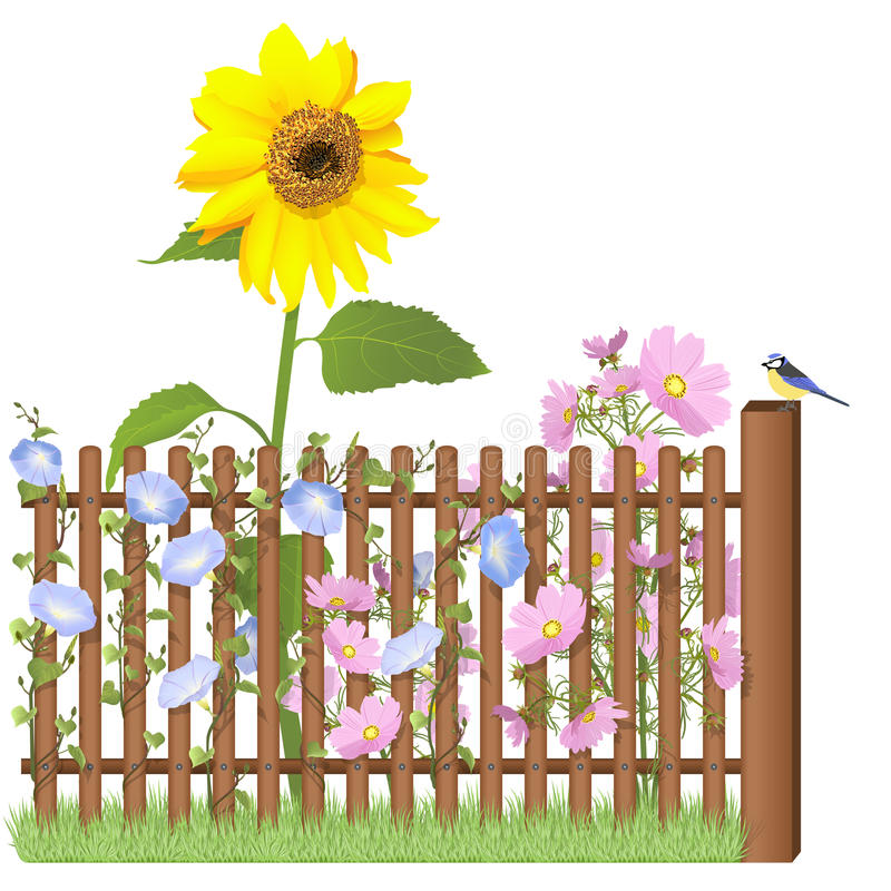 Download Wooden Fence, Flowers And Blue Tit Stock Illustration - Image: 31202200