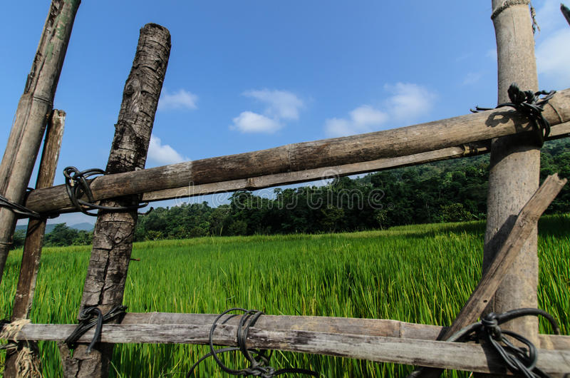 Wooden Fence With Grass Background stock photo