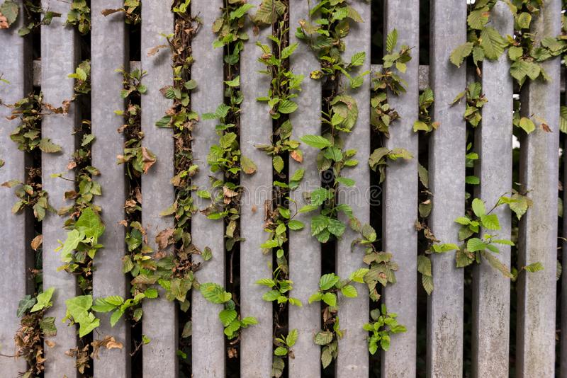 Wooden fence with green leaves as background, texture. Nature and architectural details stock images