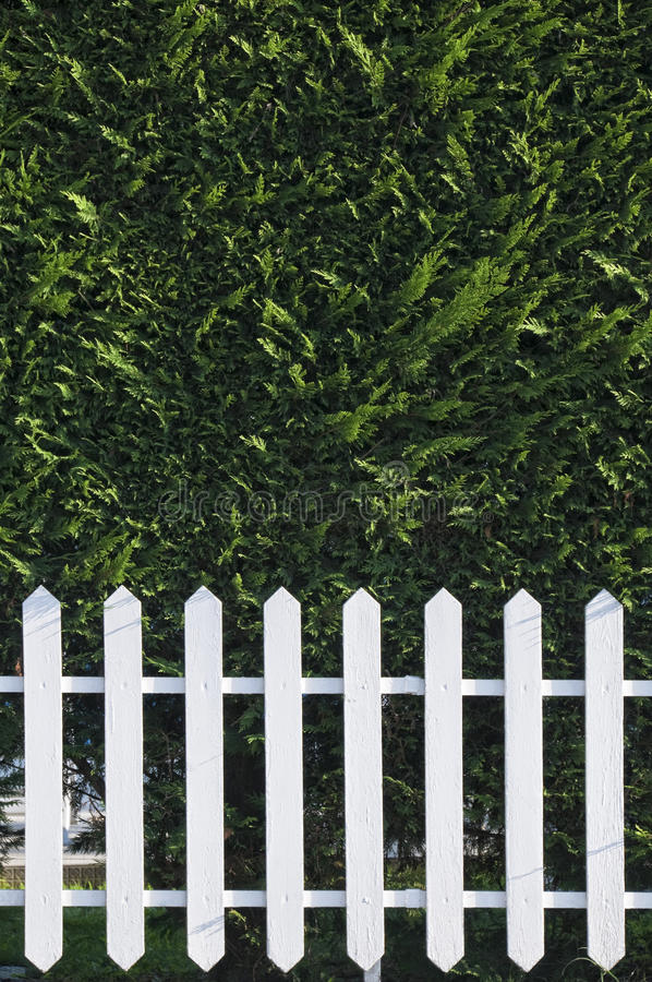 Wooden fence with hedge stock image