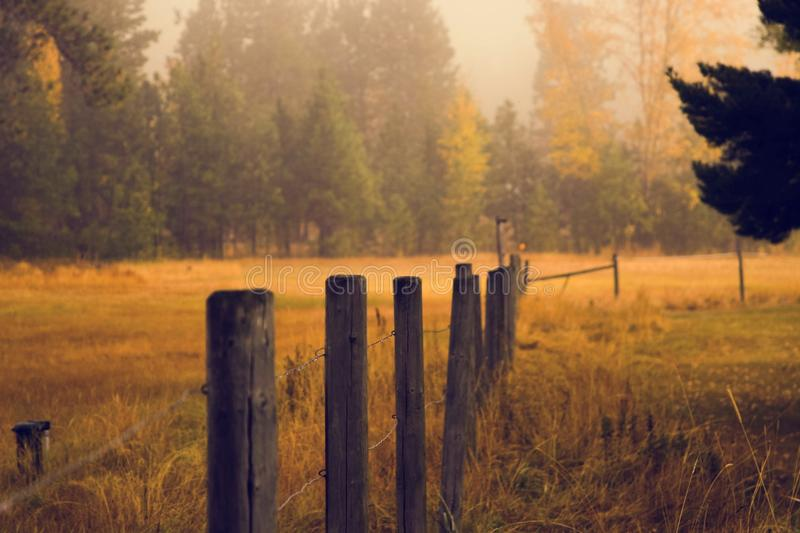 Wooden Fence Posts In Pasture Free Public Domain Cc0 Image