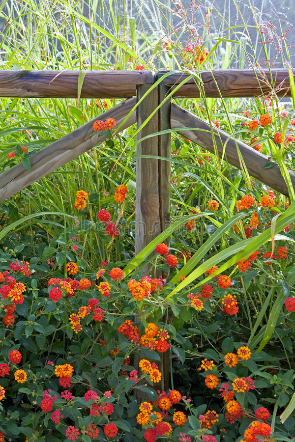 Download Wooden Fence Surrounded By Colorful Flowers Stock Photo - Image: 221686