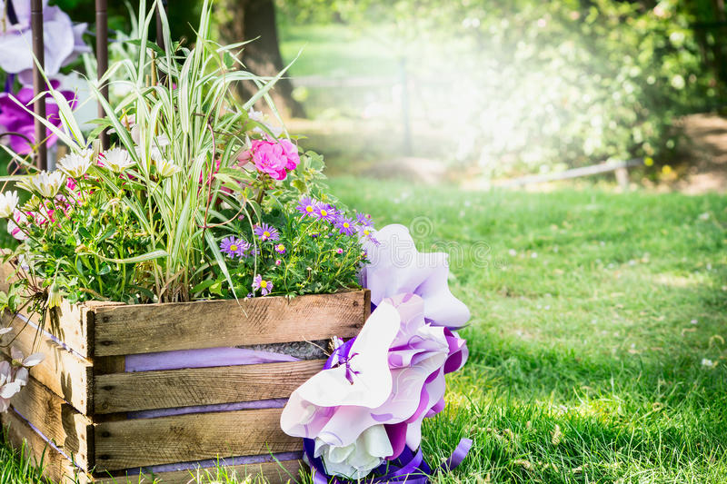 Wooden flower bed in the park with colorful spring flowers, background of a lawn and the sunlit trees royalty free stock images