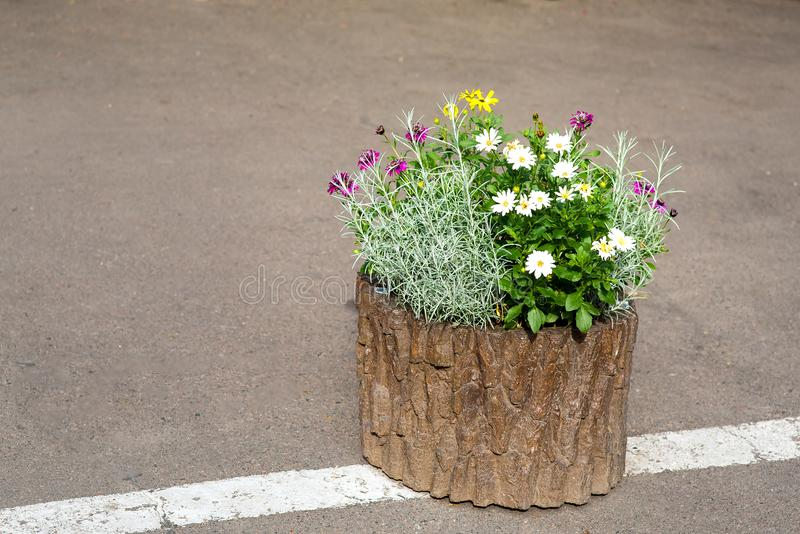 Wooden flowerpot from the stump with flowers . Wooden flowerpot from the stump with flowers installed on an asphalt road with markings royalty free stock images
