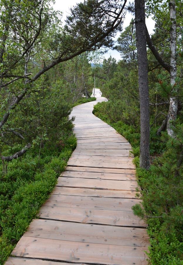 Wooden footbridge in educational trail Chalupska slat. In the Sumava National Park, Czech republic stock photos