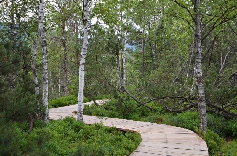 Wooden footbridge in educational trail Chalupska slat. In the Sumava National Park, Czech republic royalty free stock photography
