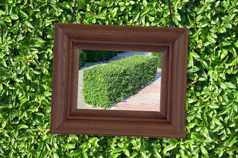 Download Wooden Frame On The Background Of Foliage Stock Photo - Image: 28970022