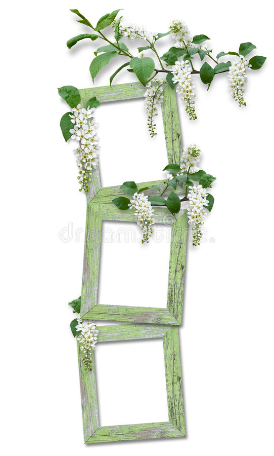 Wooden Frame With Branches Of Bird Cherry Royalty Free Stock Photos