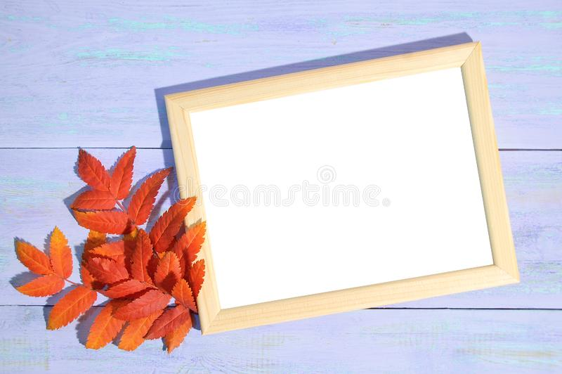 Wooden frame for photos and leaves of mountain ash. Wooden blue background royalty free stock photography