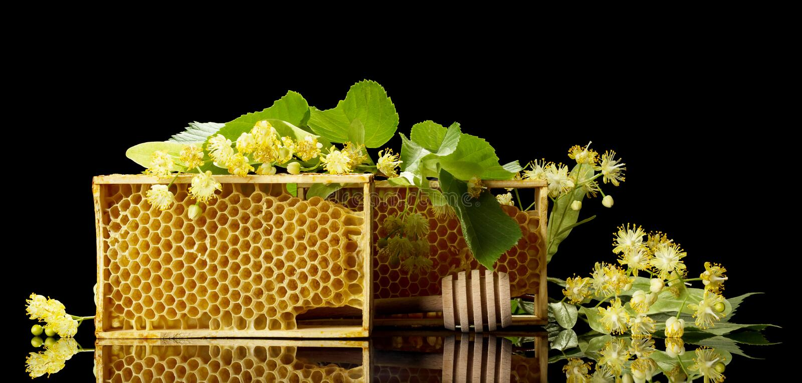 Wooden frames with bee honeycombs and Linden branches isolated on black. Background stock photo