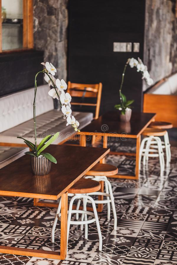 Wooden furniture cafe chairs, table, sofa, orchid. Modern wooden furniture in cafe on floor with black and white ornament tile. Two chairs, table, sofa, orchid stock photography