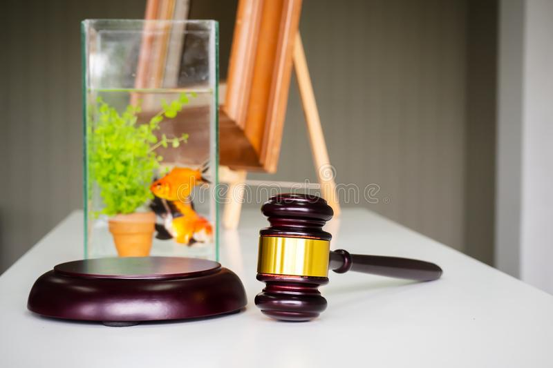 Wooden gavel on white table. Fish bidding. Business of auction b. Wooden gavel on white table. Fish bidding, animal auction. Business of auction background royalty free stock photos